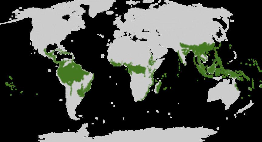 forêts-ceinture-verte-planète