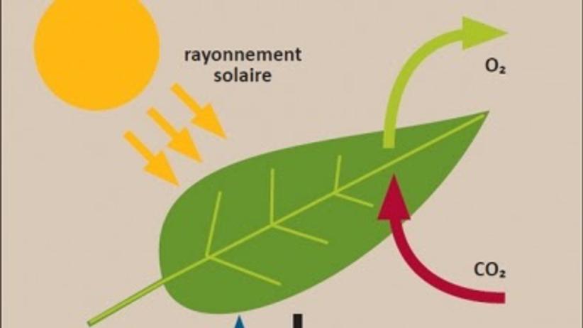 photosynthèse-forêt-amazonienne