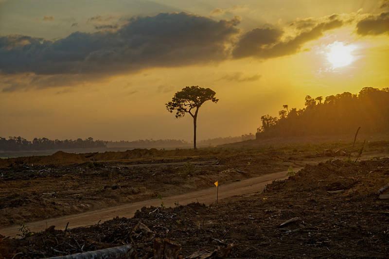 Photo de la déforestation en Amazonie.