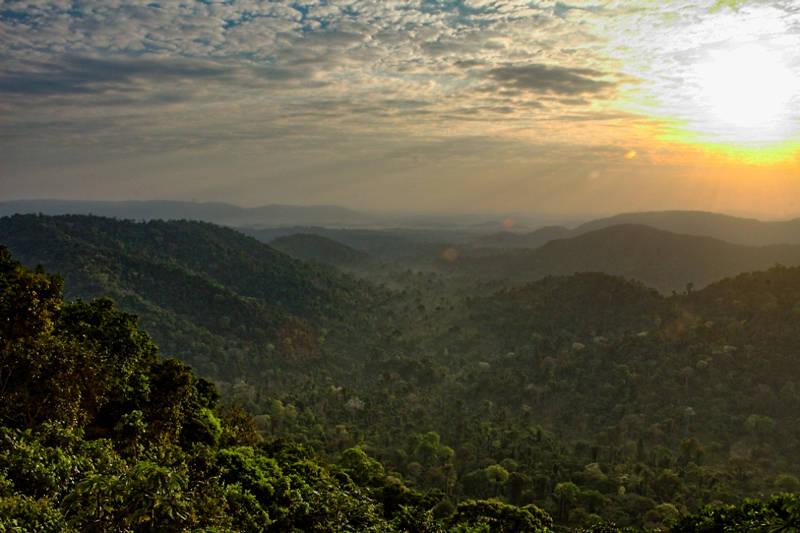 Etendue d'arbre de la forêt primaire amazonienne