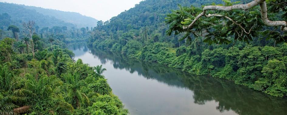 Point de vue de sur la forêt amazonienne, eaux miroirs
