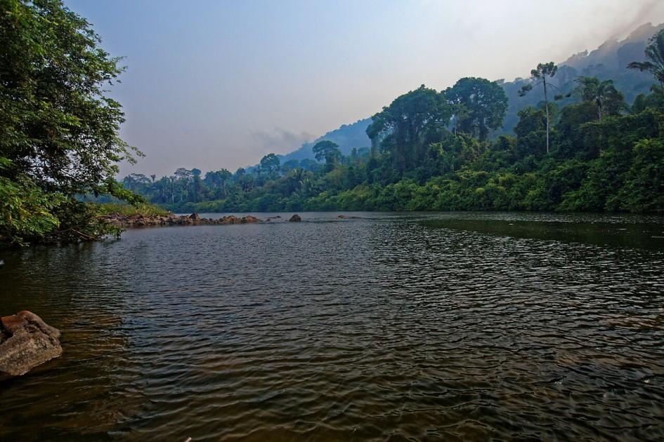 foret amazonienne accessible à tous