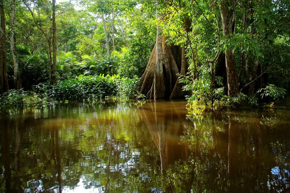Igapo, forêt amazonienne innondée, Rio Negro