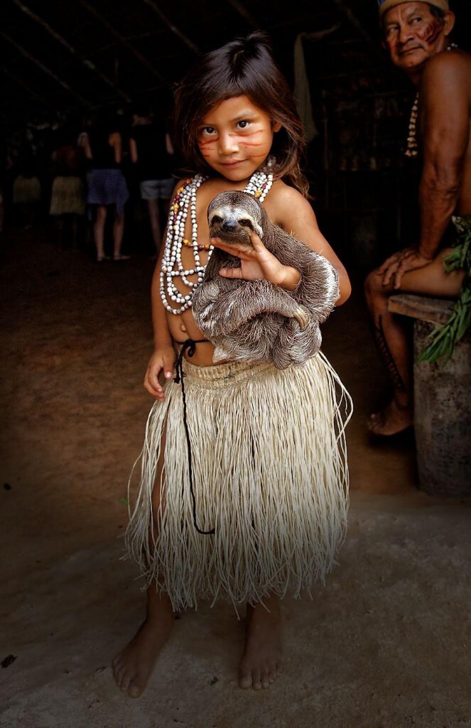 paresseux-amazonie