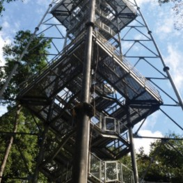 Le Musa : le musée incontournable de Manaus