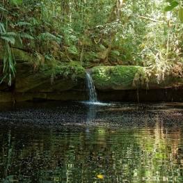 Balade dans la forêt amazonienne