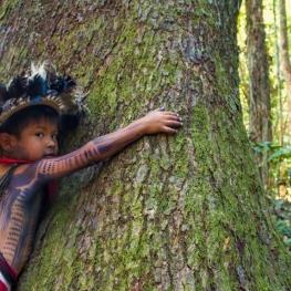 La déforestation : le fléau de la forêt amazonienne
