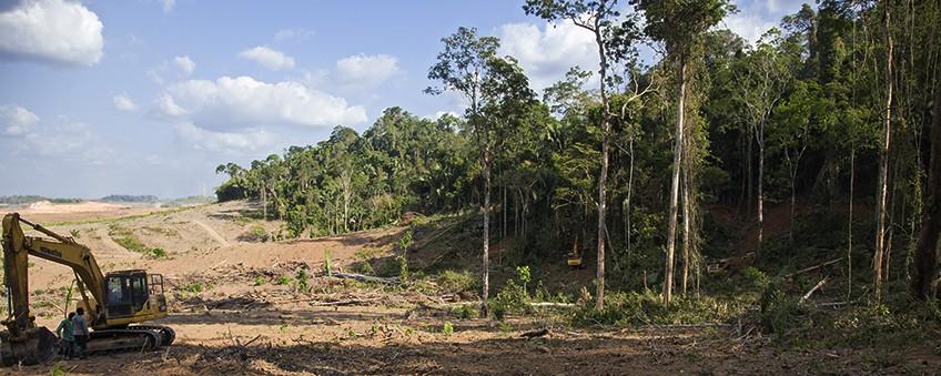 le fléau de la forêt amazonienne