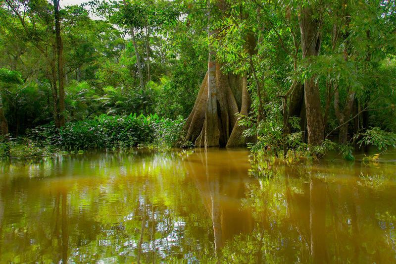 Igapo la forêt imergée en amazonie